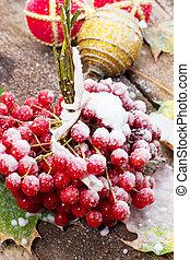 viburnum - ripe fruit plants viburnum