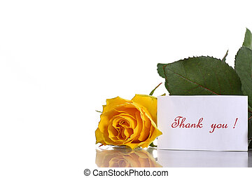 yellow rose - beautiful yellow roses on a white background