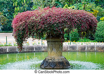 Beautiful fountain inl Botanical Garden, Kandy, Sri Lanka -...