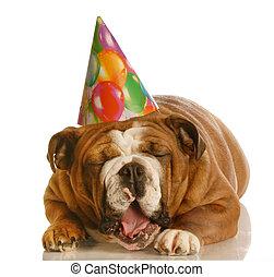 funny birthday dog - english bulldog wearing birthday hat...