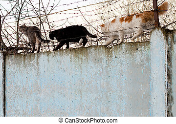 cat sitting on a concrete fence of barbed wire