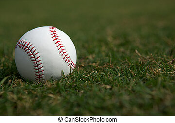 Baseball on the Grass - Baseball on the Outfield Grass with...