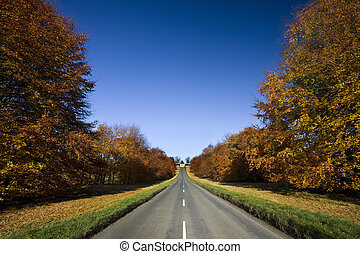 Country road in Autumn. North Yorkshire in northeast...