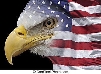 Patriotic eagle portrait - closeup of a bald eagle combined...