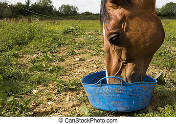 Horse feeding - A horse feeding in a field