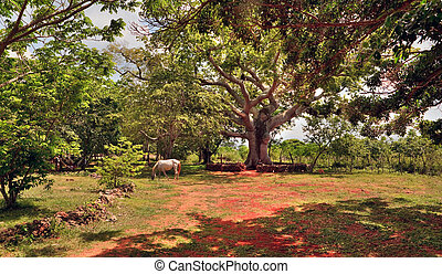 The horse who is grazing under a tree ceiba on the ranch,...
