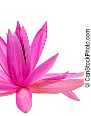 Lotus Flower Abstract