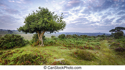 Gnarled Holly Tree - An ancient gnarled holly tree and a...