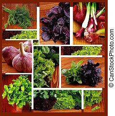 Collection of Herbs - Collection of Various Herbs, Greens,...