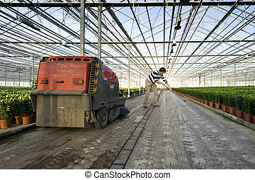 Cleaning a glasshouse - A man sweeping the concrete floor of...