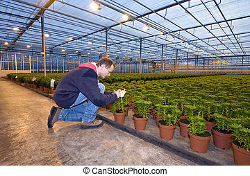 Identifying plants - A man,writing on the identification tag...