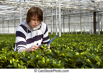 Checking plants - A man, surrounded by plants, checking the...