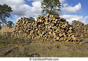 log stacks - large stacks of pine logs on the edge of a...