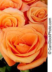 Peach Roses - A Close up macro of peach roses