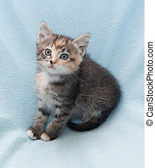 Scared tricolor kitten with green eyes
