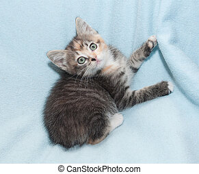 Tri-color kitten clinging legs for cover