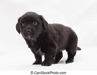 Black puppy with white spots, tail wagging