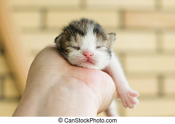 Newborn tricolor kitten lying on a palm