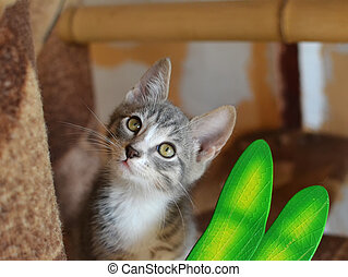 Gray kitten with green eyes