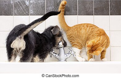 Animals at home dog and cat playing together in bathroom -...