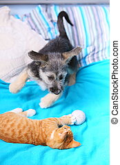 Animals at home dog and cat playing together on bed -...
