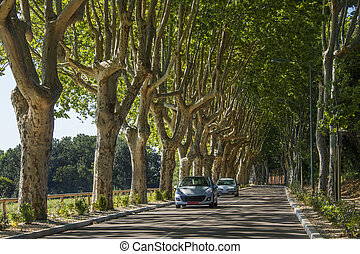 Tree lined road in the South of France - A tree lined road...