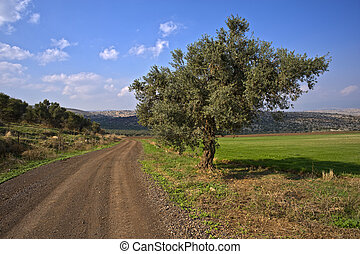 winding dirt road and olive tree