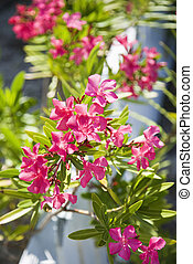 Flowering plant - Plant with pink flowers growing beside...