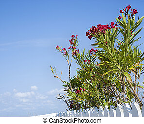 Flowering plants. - Tall plants with red flowers growing...