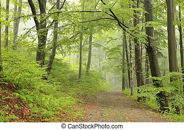 Forest trail, foggy weather in late September, Poland.