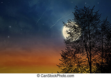 Sunset tree and moon, silhouette of tree