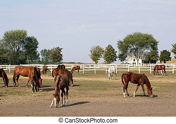 herd of horses in corral at the ranch