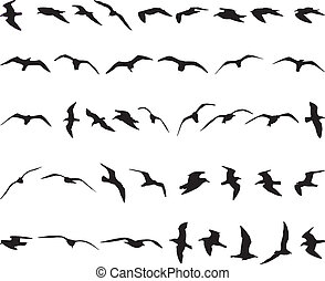 Seagulls - Forty seagulls flying black silhouettes