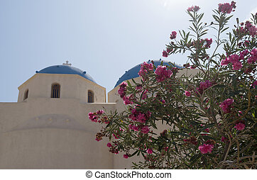 Oleander for the church in Perissa.