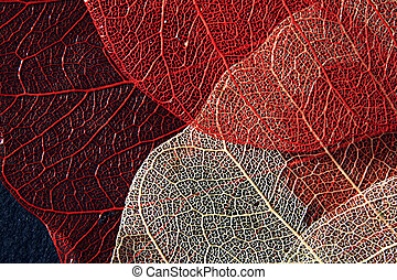 Blood vessels - Colored leaves