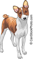 vector sketch hunting dog Basenji breed - color sketch of...