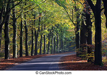 Autumn landscape of a road through the forest