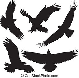 Eagle Silhouette on white background
