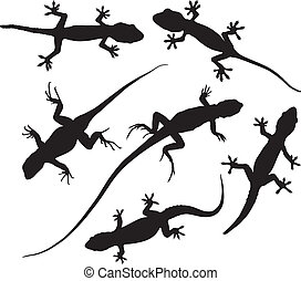 Lizard Silhouette on white background