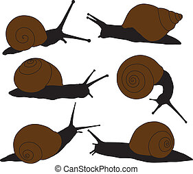 Snail Silhouette on white background