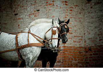 horses carriage - horse in carriage