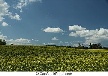Cole field in Czech Republic