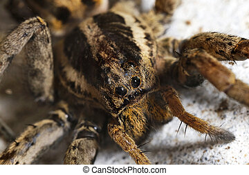 closeup of a Spider macro wildlife background