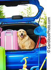 Dog and luggage in the trunk