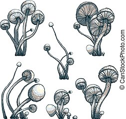 Cramped Toadstool Mushrooms Composition Collection - Vector...