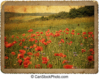 Red poppies vintage old paper card