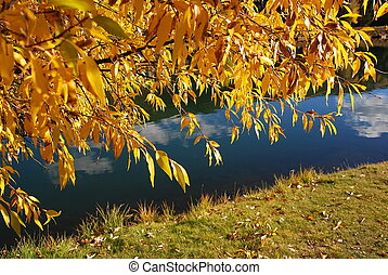 Yellow Aspen over Blue Stream - The brilliant yellow gold...