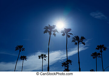 Palm trees in southern California Newport area with sun...