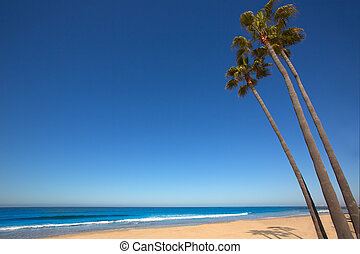 Newport beach California palm trees on shore - Newport beach...