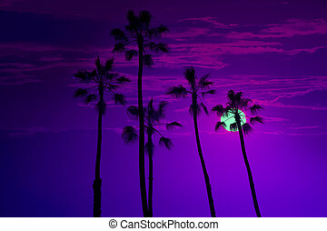 California high palm trees sunset sky silohuette background...